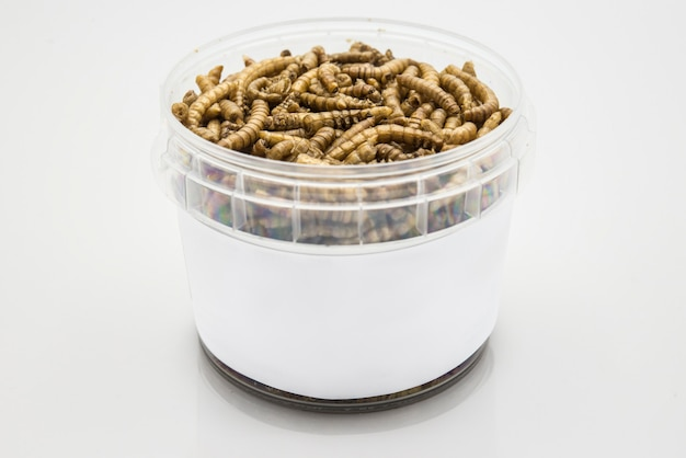 Mealworms crustaceans tenebrio molitor izolowane