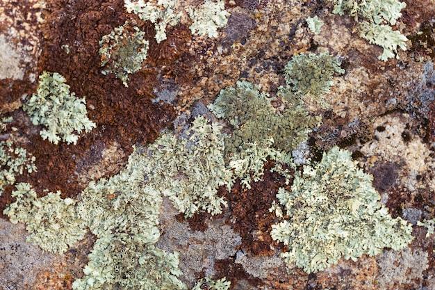 Mech dorośnięcie na skałach w lesie. organiczne tekstury naturalnego tła.