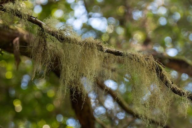 Mech na gałęzi w cieniu drzewa