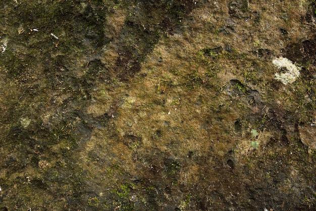 Mech na kamieniu w przyrodzie
