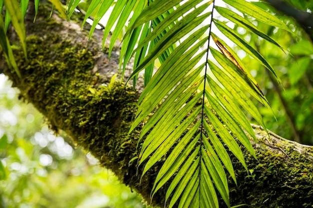 Mech na pniu drzewa w tropikalnym lesie deszczowym
