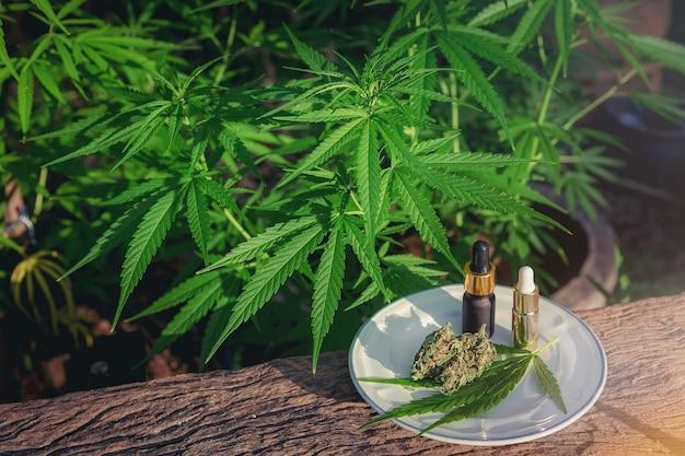 Medyczna marihuana marihuana na drewnianym stole z ekstraktem olejku, pąkami kwiatowymi i liśćmi.