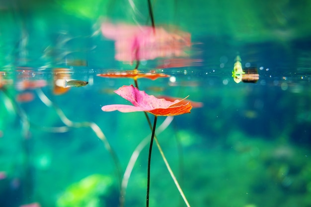 Meksykańskie cenote pod wodą