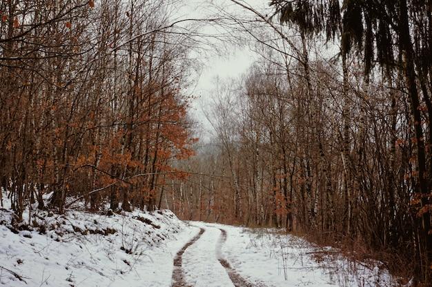 Melancholijny niemiecki las w okresie zimowym, z samochodowymi śladami na śniegu i drzewami z pomarańczowymi liśćmi.