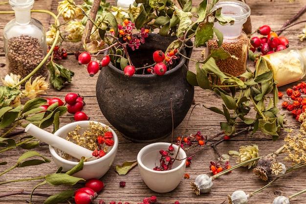 Melonik czarownicy, jemioła, bzu czarnego. suche zioła, kwiaty, świeże jagody