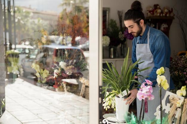 Męska kwiaciarnia układa kwiatu garnek w jego sklepie