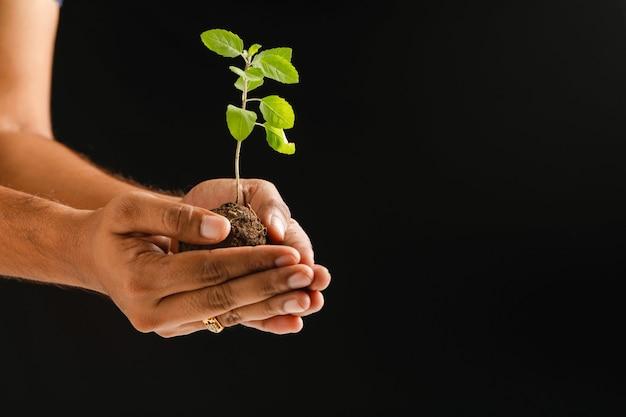 Męska ręka trzyma małej rośliny na czarnym tle
