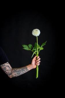 Męska ręka z białym delikatnym kwiatem dalii na białym tle