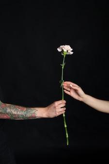 Męska ręka z tatuażami dając kwiat goździka kobiecej dziewczęcej dłoni, gratulacyjna koncepcja na czarnym tle