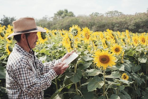 Męski azjatycki rolnik używa cyfrową pastylkę w słonecznikowym gospodarstwie rolnym