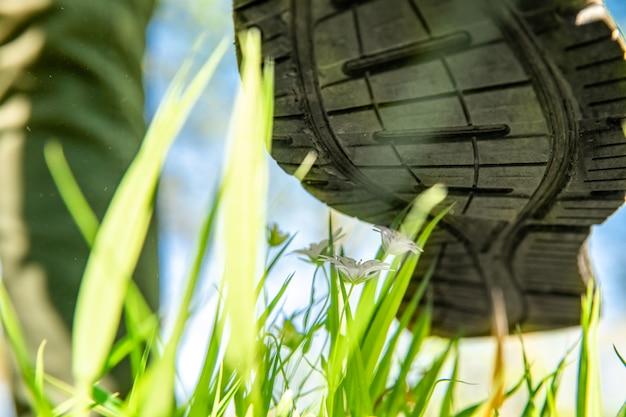 Męskie buty depczą kwiaty na zielonej łące, ludzie niszczą przyrodę