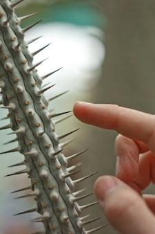 Męskie dłonie dotykają igieł kaktusowych. sprawdzanie wilgotności w ogrodzie botanicznym. rozmycie, czyste, jasne, nowoczesne, kolorowe, kontrastowe, selektywne ustawianie ostrości. pojęcie bólu