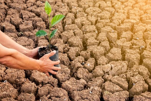 Męskie dłonie sadzą drzewa na suchych obszarach. gleba jest łamana w gorącym powietrzu. i mieć miejsce na wprowadzanie tekstu