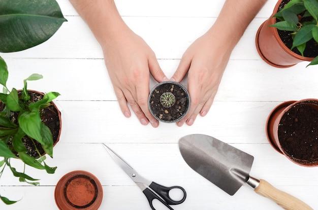 Męskie dłonie z kaktusa. przesadzanie kaktusów. narzędzia ogrodnicze łopata, garnek, kaktusy