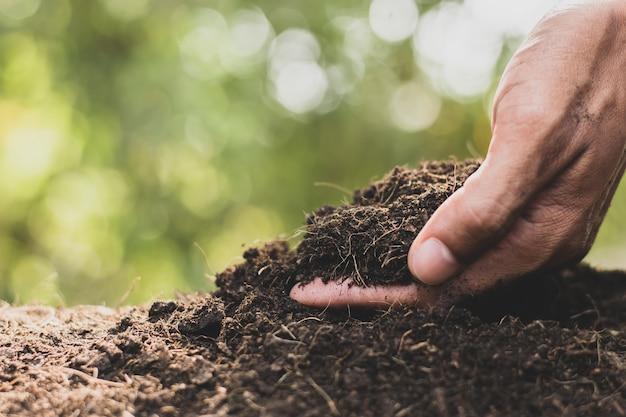 Męskie ręce zbierają ziemię, żeby zasadzić drzewa.