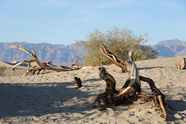 Mesquite flat sand dunes with trees park narodowy doliny śmierci kalifornia usa