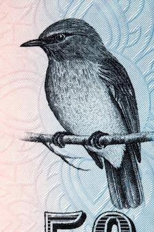 Mętnoniebieski muchołówka portret ze sri lanki pieniędzy