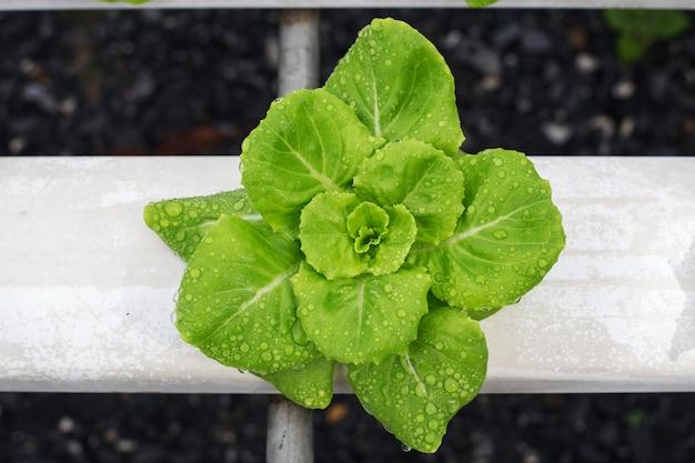 Metoda hydroponiczna
