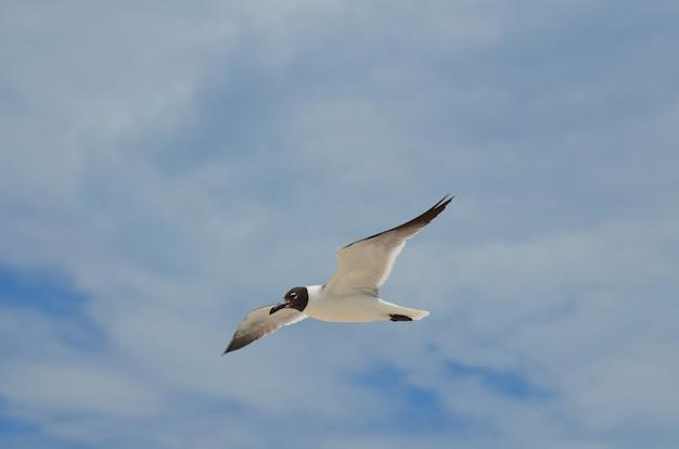 Mewa latająca na niebie w dzień wypełniony chmurami.