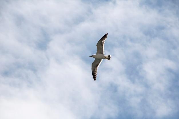 Mewa latająca na niebieskim niebie