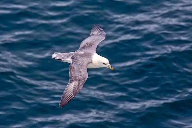 Mewa latająca nad powierzchnią oceanu