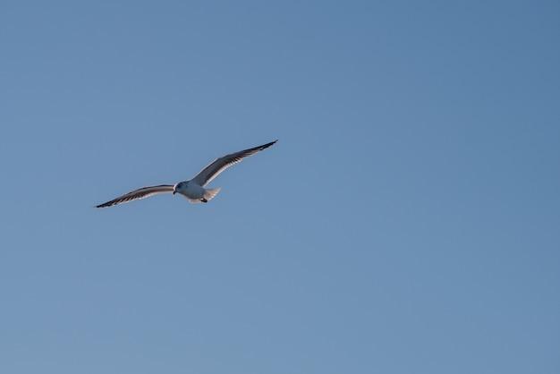 Mewa latająca w błękitne niebo.