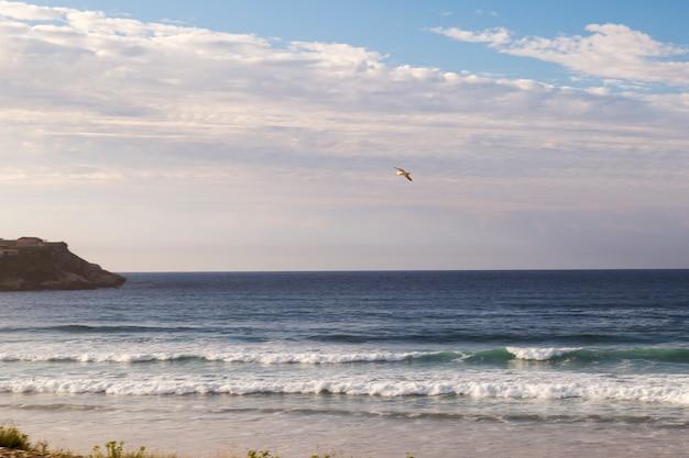 Mewa latające po niebie