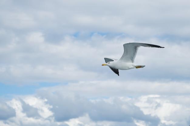 Mewa latania w niebo z chmurami