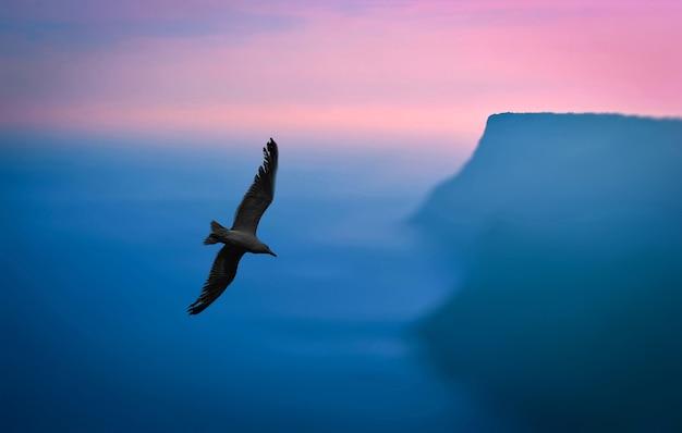 Mewa leci na niebie nad morzem. krajobraz o zachodzie słońca nad brzegiem morza.