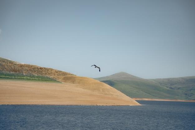 Mewa na niebieskim jeziorze