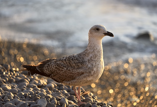 Mewa na plaży zbliżenie