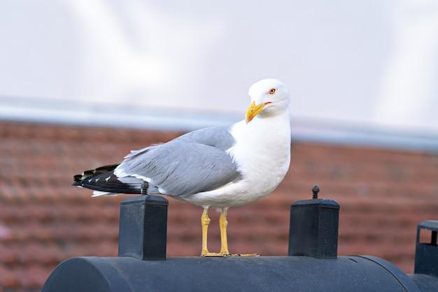 Mewa ptak na dachówką w słoneczny dzień.