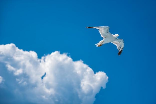 Mewa rosnących w otwartym niebie