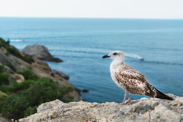 Mewa siedzi na skale przed błękitnym morzem. ptaki strefy przybrzeżnej morza czarnego