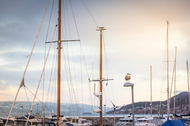 Mewa siedzi na streetlight na tle masztów jachtów żaglowych zacumowanych w marinie.