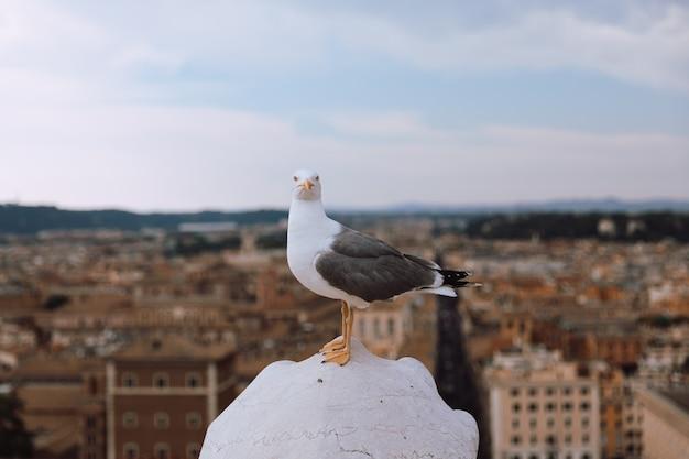 Mewa śródziemnomorska siedzenia na dachu vittoriano w rzymie, włochy. letnie tło ze słonecznym dniem i błękitnym niebem