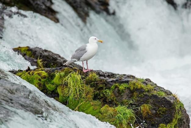 Mewa stoi na skale na środku rzeki.