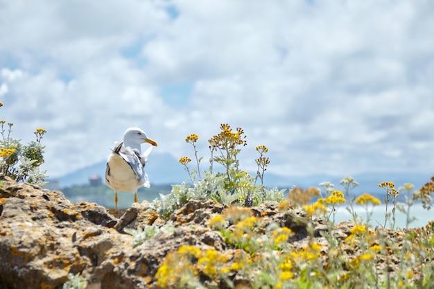 Mewa stojąca na kamieniach wśród żółtych kwiatów
