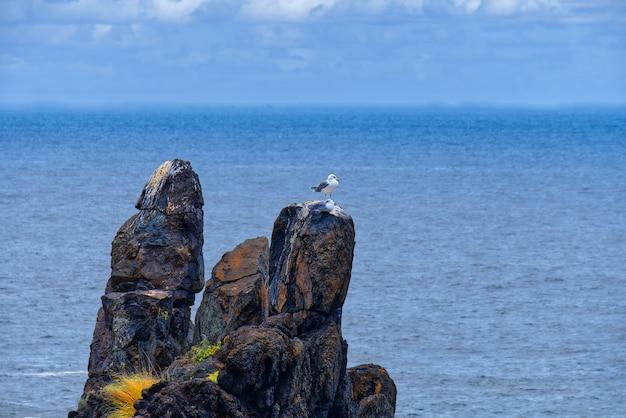 Mewa stojąca na skale z niewyraźnym morzem w