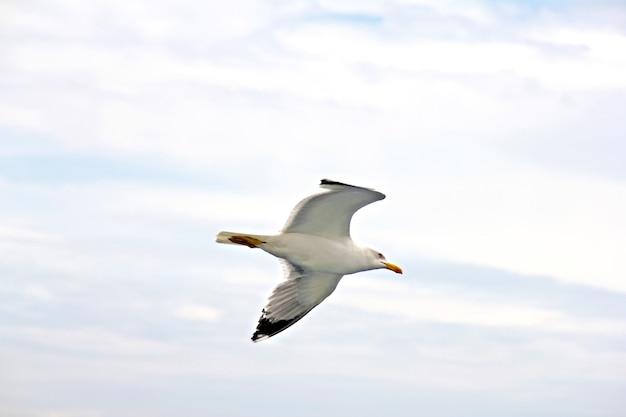 Mewa w locie ze skrzydłami rozpostartymi na zachmurzonym niebie