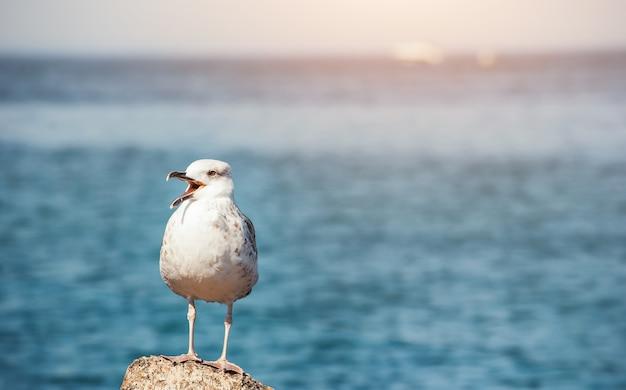 Mewa zostaje na kamieniu w pobliżu morza w tle