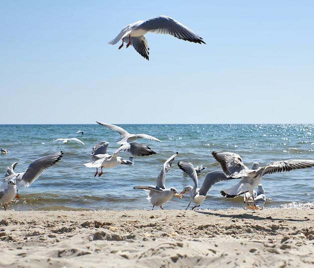 Mewy latają nad piaszczystym wybrzeżem morza czarnego w letni dzień, region chersoniu na ukrainie