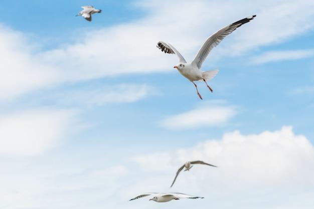 Mewy latające na niebie