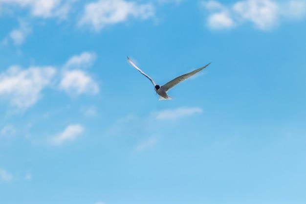 Mewy latające po błękitnym niebie z białymi chmurami