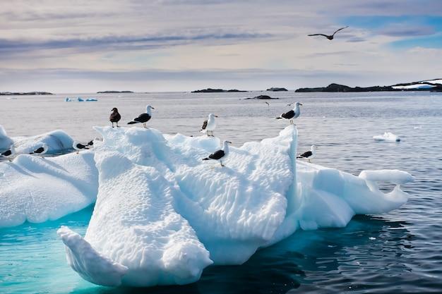 Mewy na antarktydzie