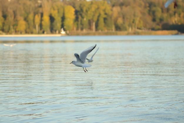 Mewy na jeziorze proszą o jedzenie w słoneczny dzień mewy bawią się w wodzie