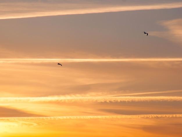 Mewy na kolorowym tle zachodu słońca nieba