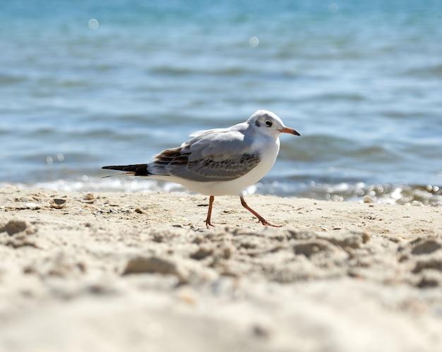 Mewy na piaszczystym brzegu morza czarnego w letni dzień, ukraina kherson region