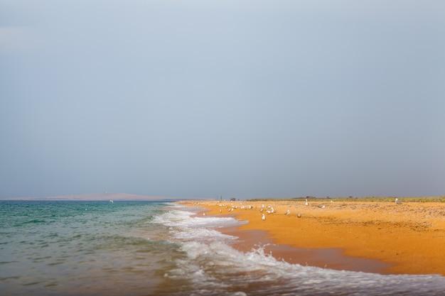 Mewy na plaży przed burzą