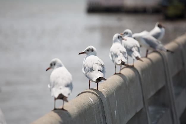 Mewy stoją na betonowym moście nad morzem.